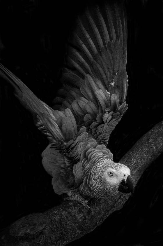 Photographie de Elsa Laurent... très travaillée avec lumières, contraste, matière...